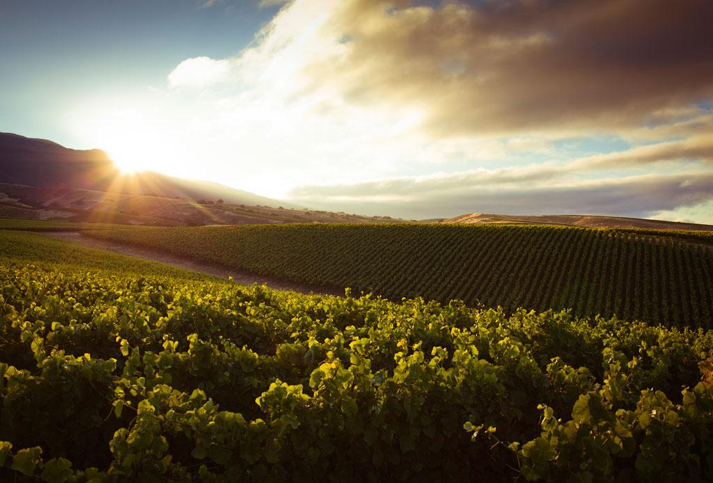 El tour de vinos de California que no te puedes perder - vinos-4