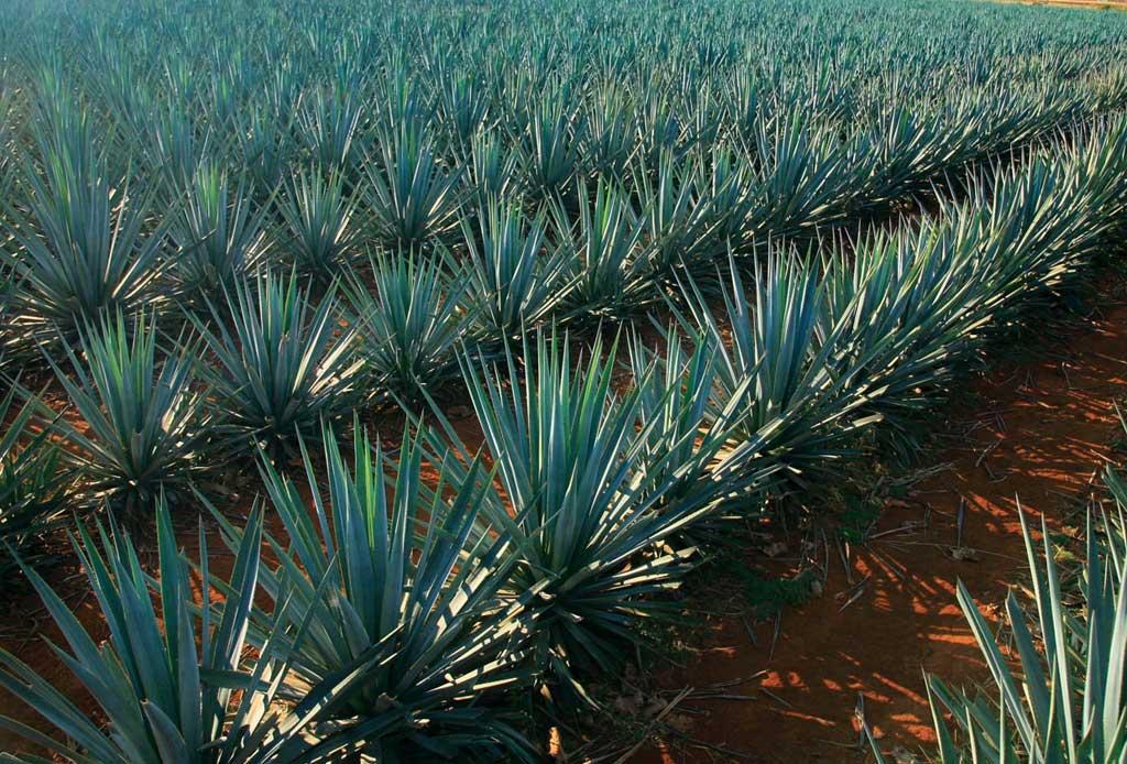Arandas, un destino para los amantes del tequila - arandas-altos-tequila-2