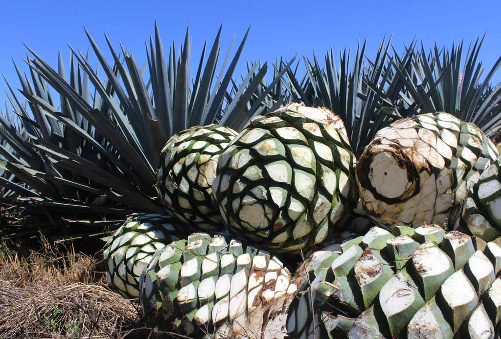 Arandas, un destino para los amantes del tequila - arandas-altos-tequila-3
