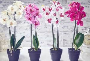 Los 6 pasos infalibles para cuidar una orquídea