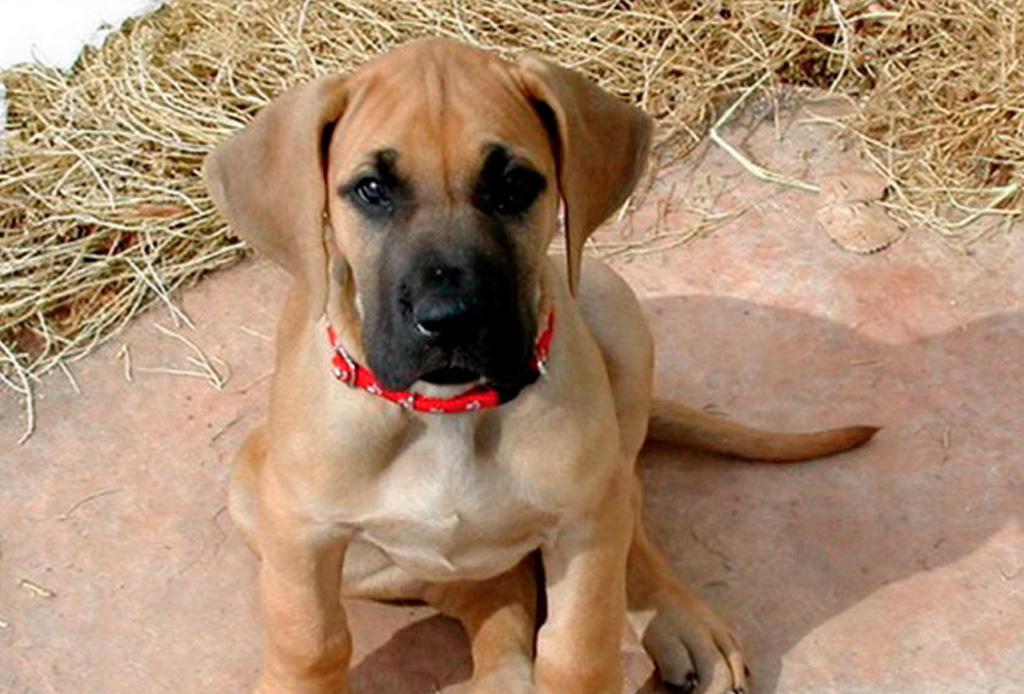 Así es como debes comenzar a entrenar a tu cachorro - portada-cachorro-1024x694