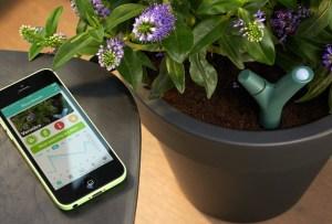5 gadgets que te ayudarán a cuidar tus plantas