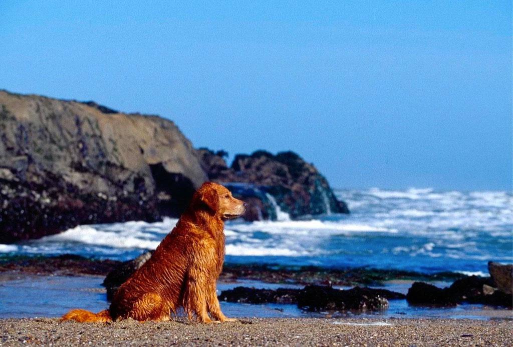 8 planes en FAMILIA alrededor de México para estas vacaciones - perro