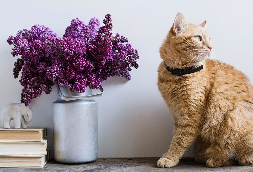Adiós al estereotipo de 'Cat Lady', lo de hoy es ser 'Plant Lady' - plant-woman-cat-woman-2