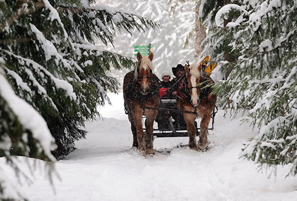8 actividades para disfrutar Whistler al máximo durante invierno - sleight
