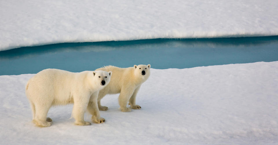 Canadá sobre rieles: ¡Descubre este país de una manera única! - osos