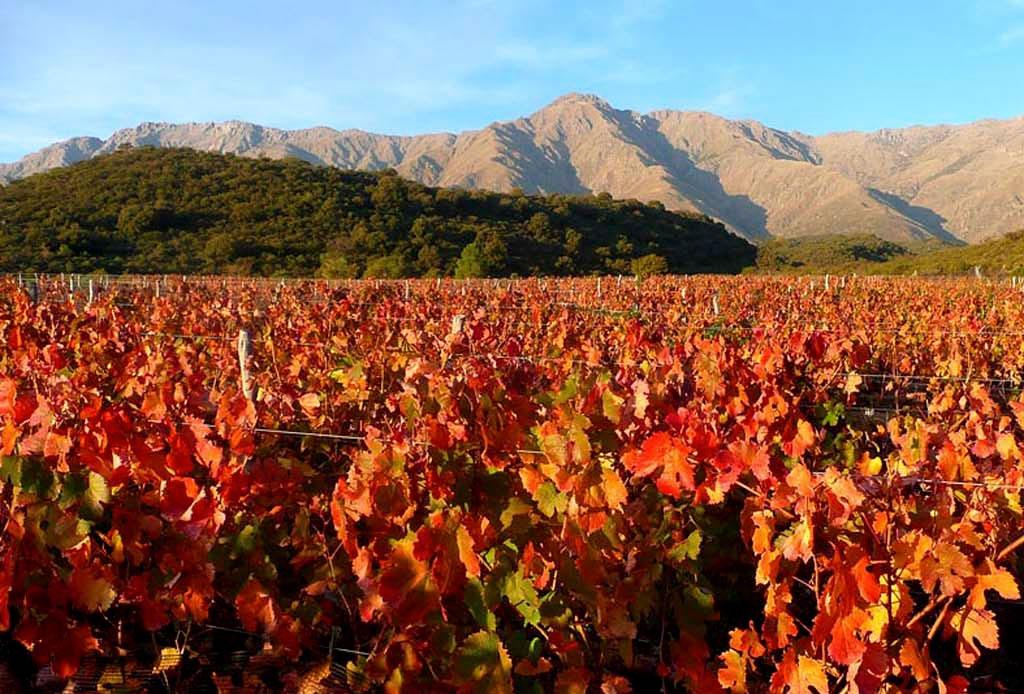 Las ruta del vino en Argentina para verdaderos conocedores - argentina-cordoba