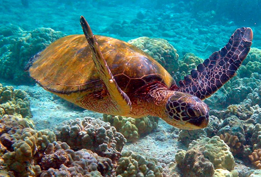 Recorre México como nunca antes: bajo el mar - buceo-costalegre