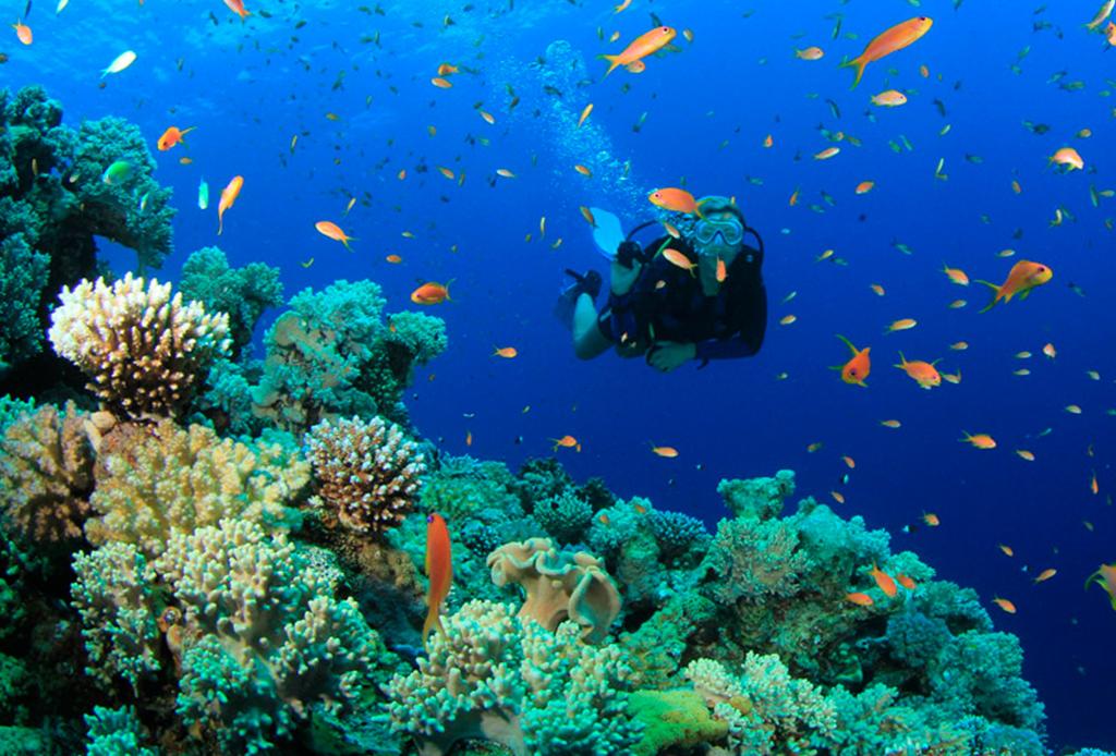 Recorre México como nunca antes: bajo el mar - buceo-cozumel