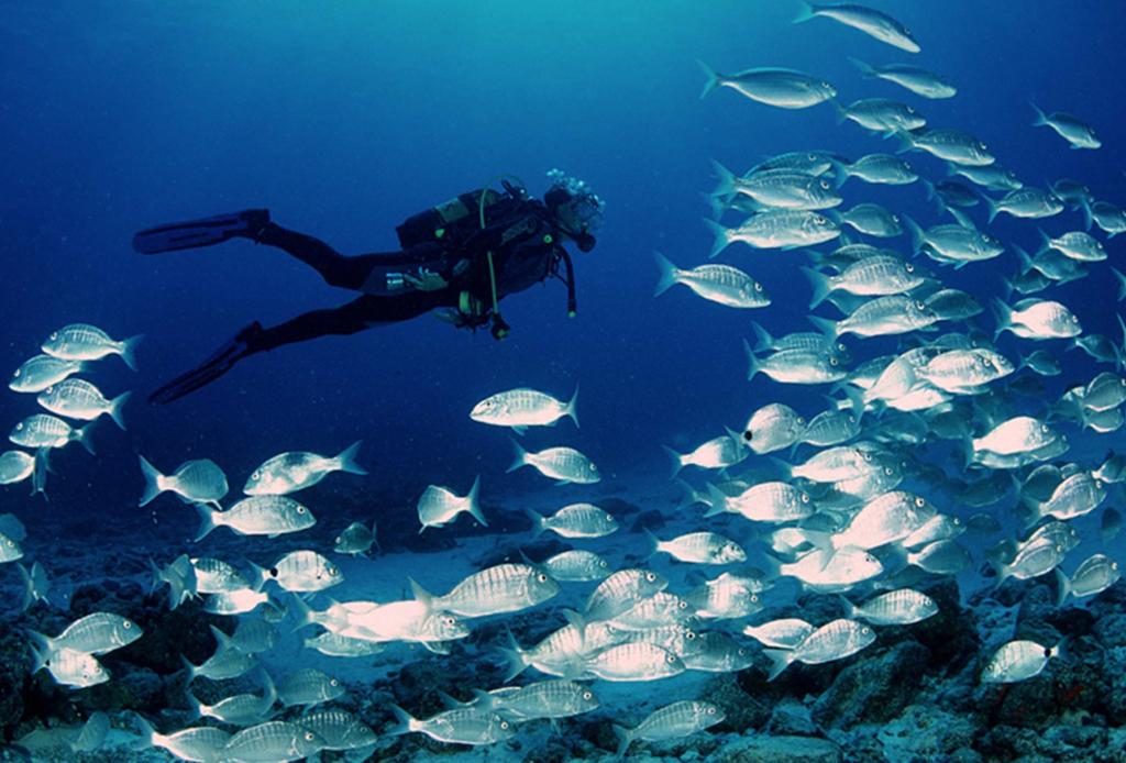Recorre México como nunca antes: bajo el mar