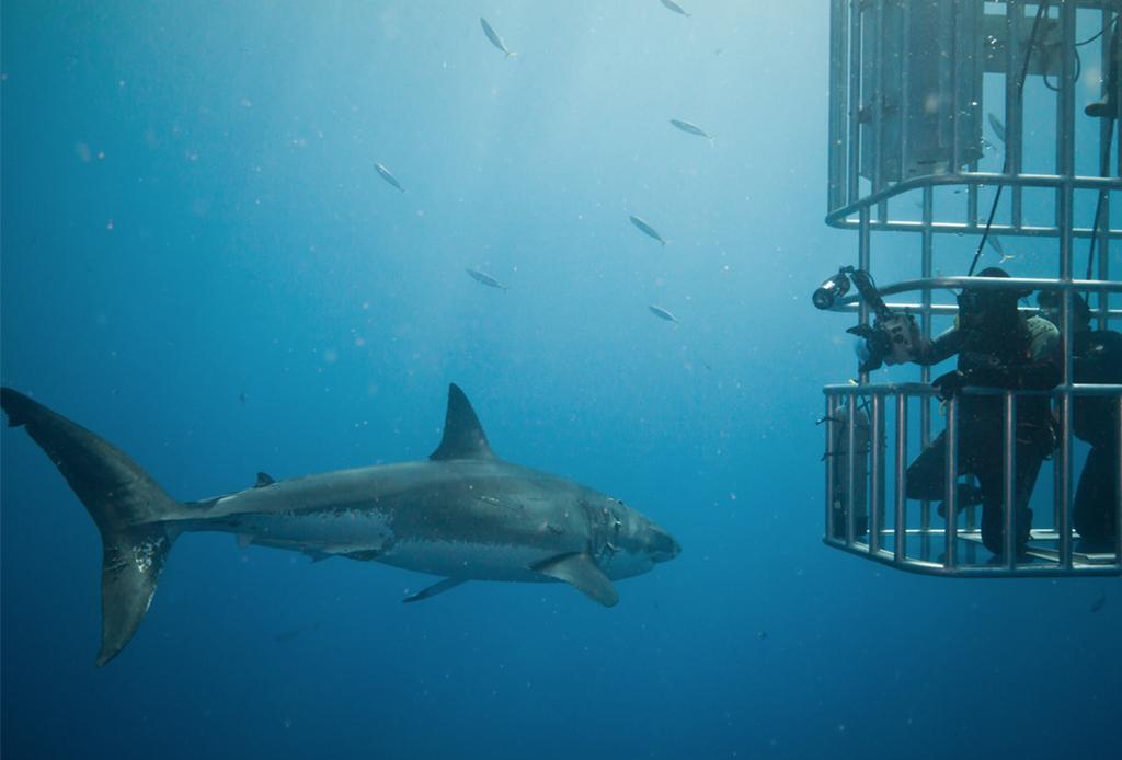 Recorre México como nunca antes: bajo el mar - buceo-tiburon
