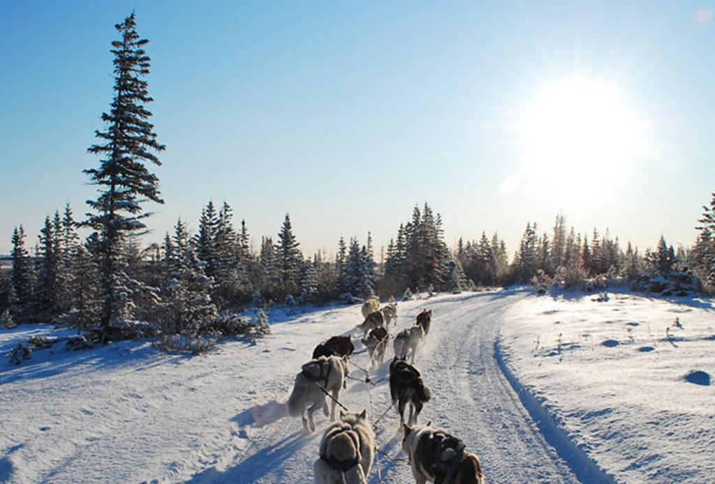 El mejor lugar para ver osos polares: Churchill, Canadá - oso-2
