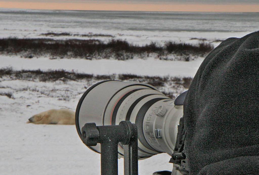 El mejor lugar para ver osos polares: Churchill, Canadá - oso-213