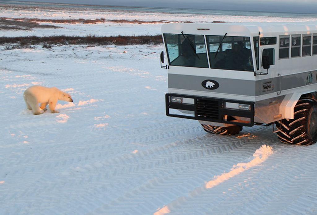 El mejor lugar para ver osos polares: Churchill, Canadá - oso-5
