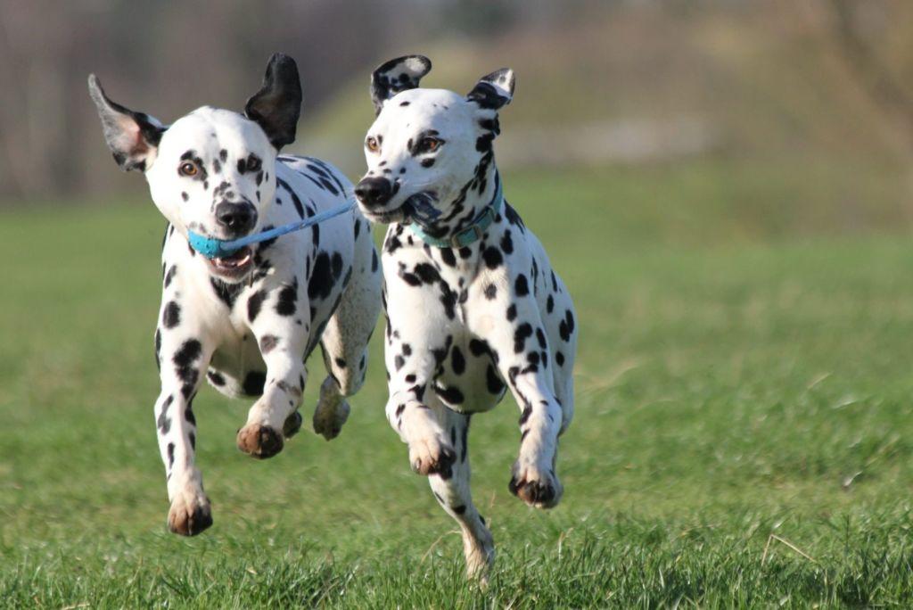 Las 10 razas de perro más activas para los niños