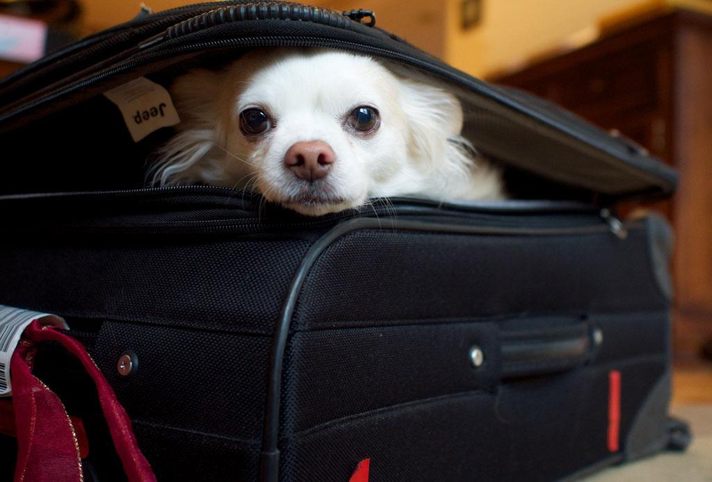 ¿Saldrás de viaje? Encuentra hospedaje para tu perro en la CDMX