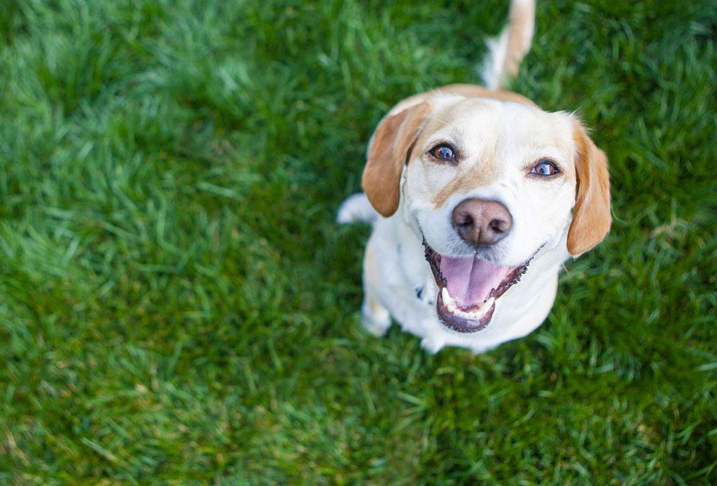 ¿Saldrás de viaje? Encuentra hospedaje para tu perro en la CDMX - hospedaje-mascota-4