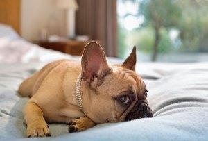 Conoce los muebles más costosos para mascotas