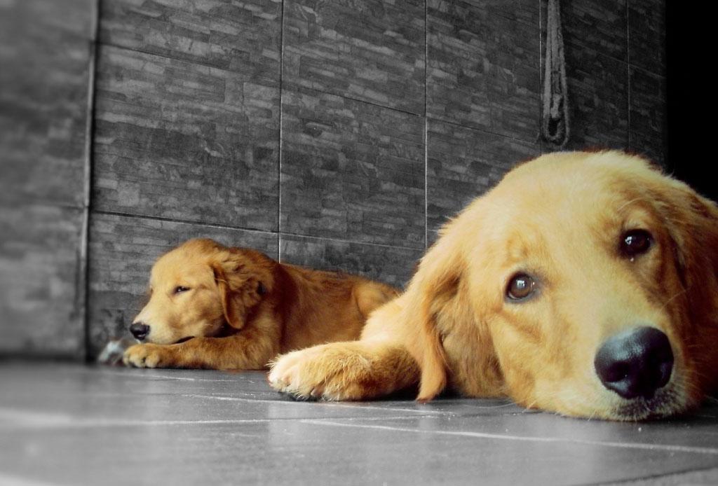 """¡Atención humano! A los perros adultos no les gusta que les hables como """"bebés"""" - cachorro-perro-5"""