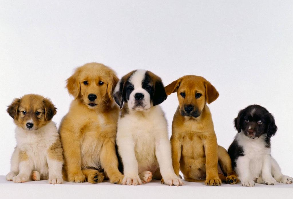 """¡Atención humano! A los perros adultos no les gusta que les hables como """"bebés"""" - cachorros-perros"""