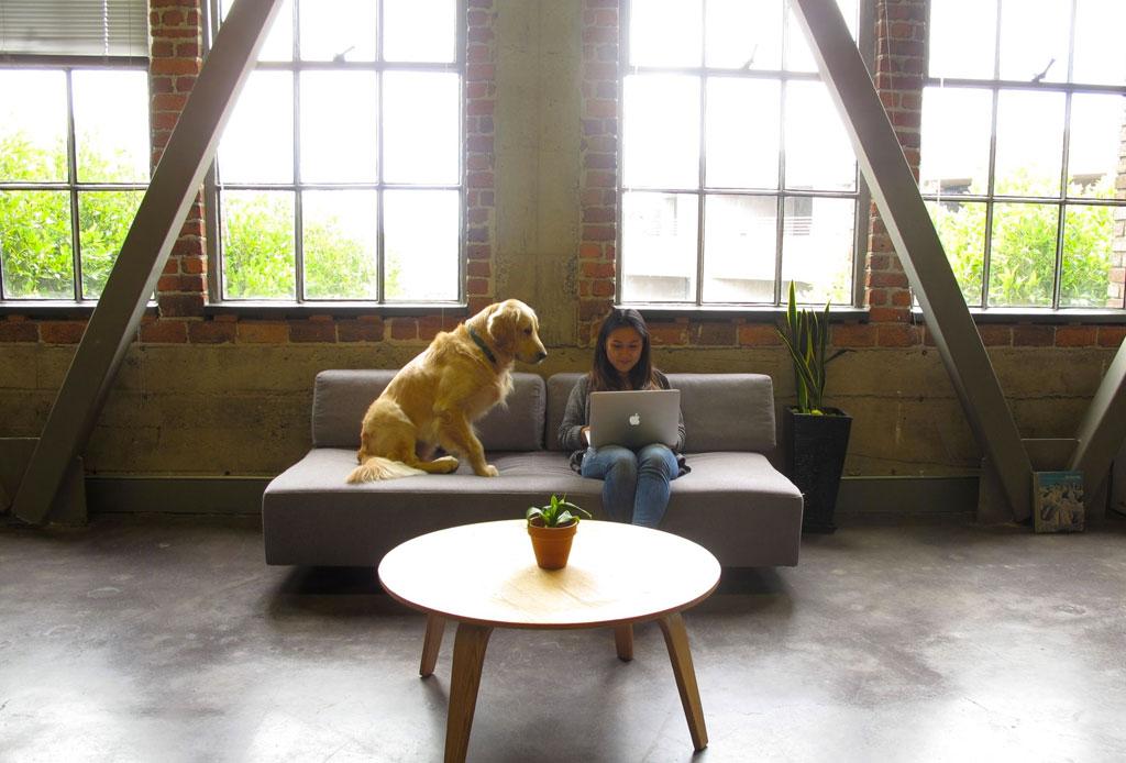 Consejos para convertir tu oficina en un lugar pet friendly - oficina-pet-friendly-3
