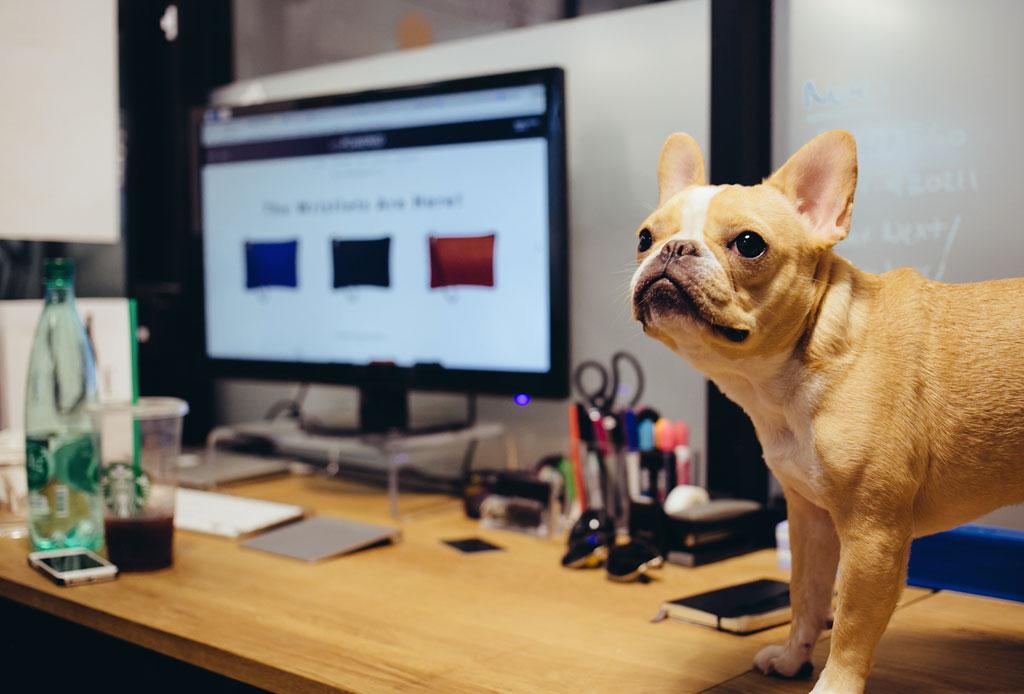 Consejos para convertir tu oficina en un lugar pet friendly - oficina-pet-friendly-5