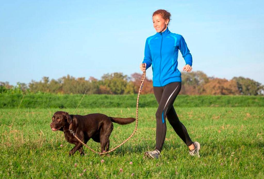 Planes con tu perro para este fin de semana - perro-correr-calor