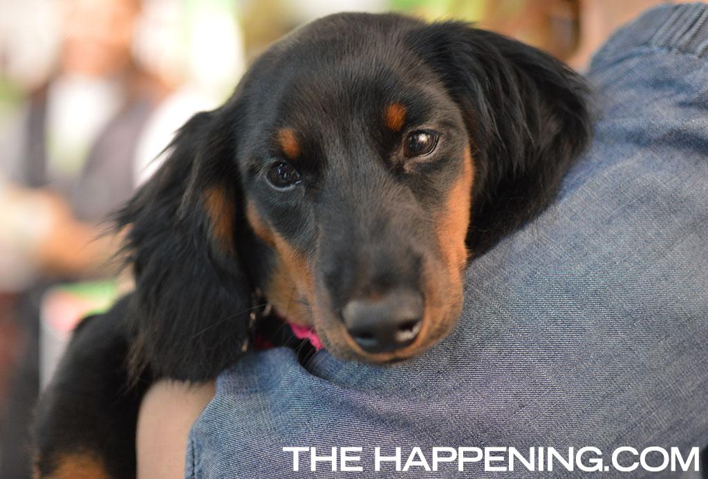 Planes con tu perro para este fin de semana