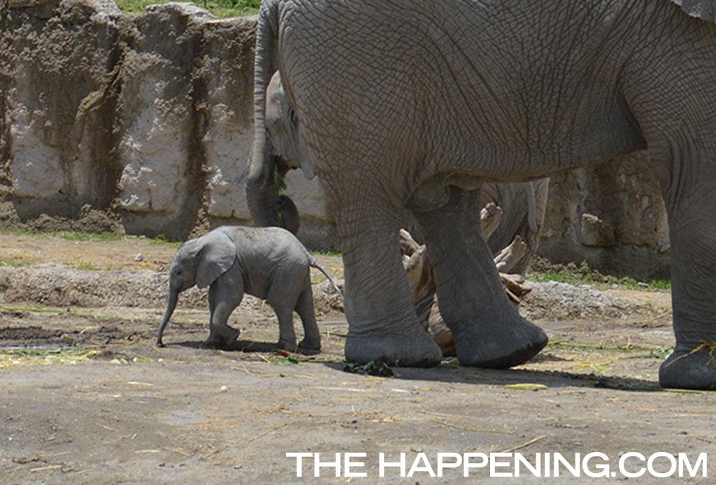 ¡Roadtrip en familia! Conoce al nuevo integrante del Africam Safari
