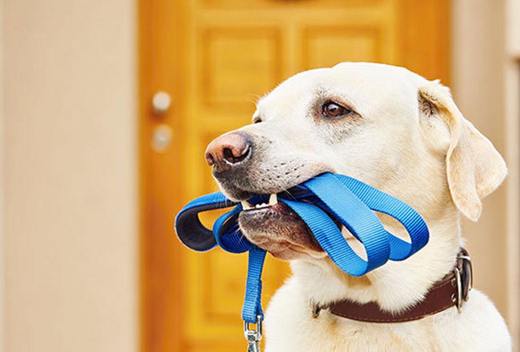 ¡A tan solo un click! Los servicios online para tu perro - perro-3
