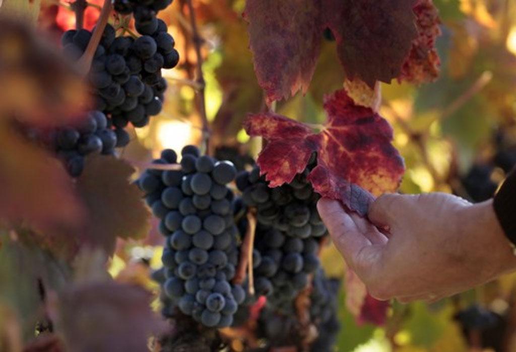 7 bodegas que debes de visitar en Rioja, España - sabanaas-de-oro-1