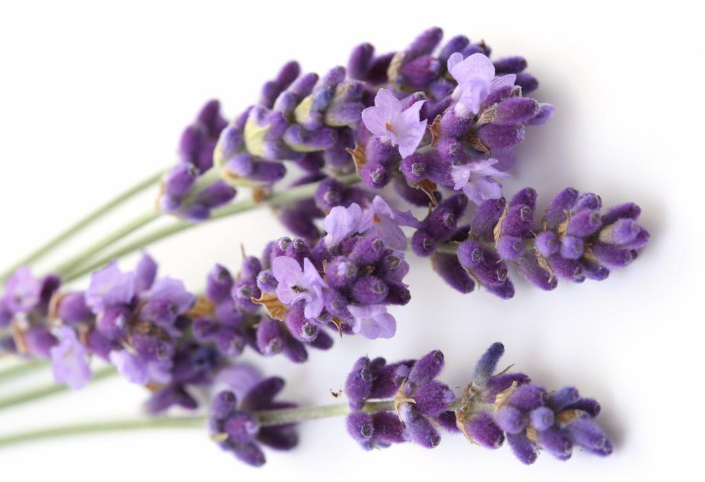 ¿Insomnio? pon estas flores en tu habitación para dormir mejor - lavanda-1024x700