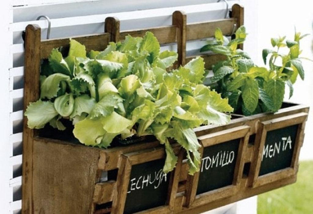 DIY: Crea tu propio huerto orgánico - siembra-tomillo