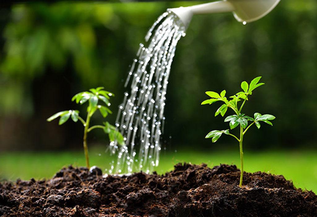 DIY: Crea tu propio huerto orgánico - watering-plants