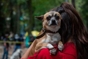 ¿Cómo ayudar a tu mascota en un temblor?