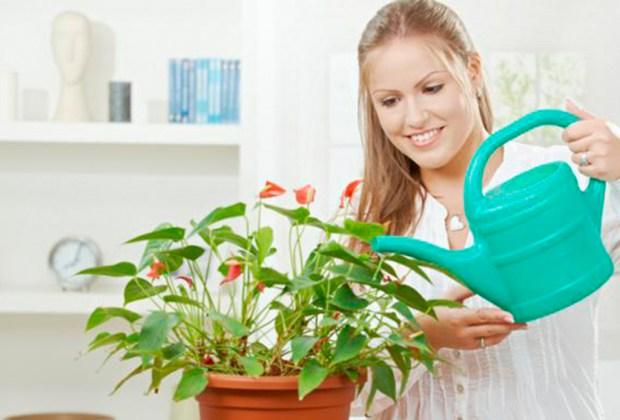 Decorar tu casa con plantas tiene más beneficios de los que te imaginas - auto-1