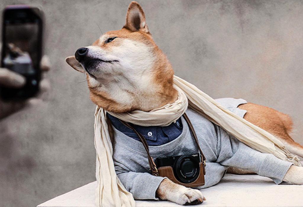 Ahora hay perros que son beauty influencers y les va mejor que a muchos humanos