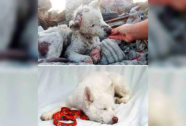 Increíbles fotos de antes y después de perritos rescatados - descuidado-1024x694