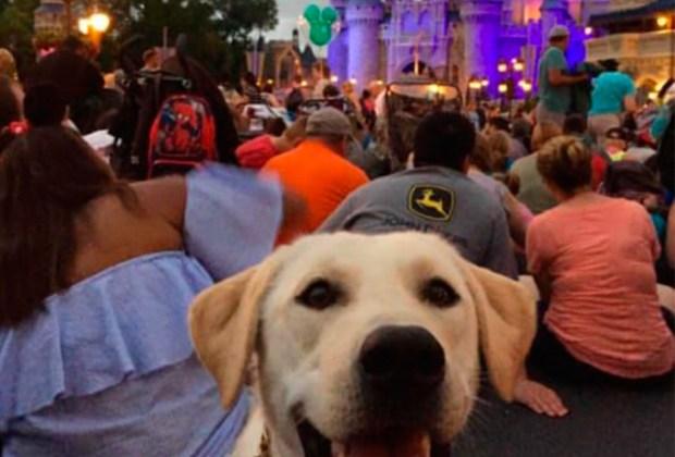 ¡Algunos lugares de Disney ya son pet-friendly! - disney-1024x694