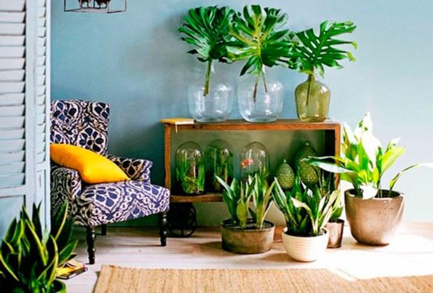 Decorar tu casa con plantas tiene más beneficios de los que te imaginas - oxigeno