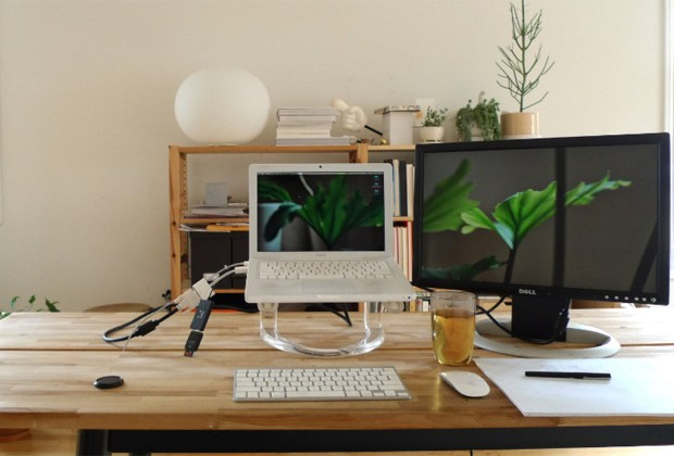 Decorar tu casa con plantas tiene más beneficios de los que te imaginas - trabajo