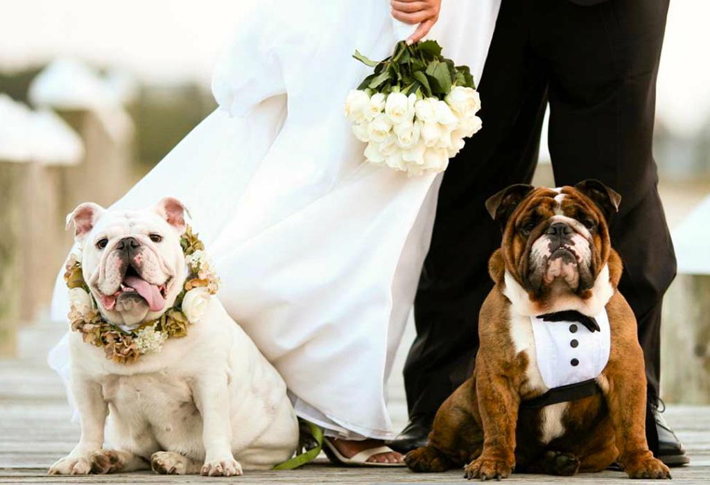 ¿Cómo puedes incluir a tu perro en tu boda?