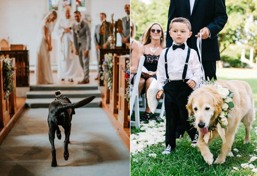 ¿Cómo puedes incluir a tu perro en tu boda? - dogwedd