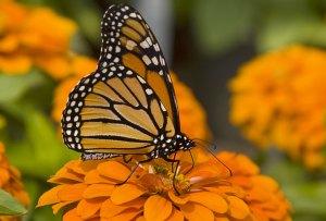 ¡Escápate este fin de semana al santuario de las mariposas monarca!