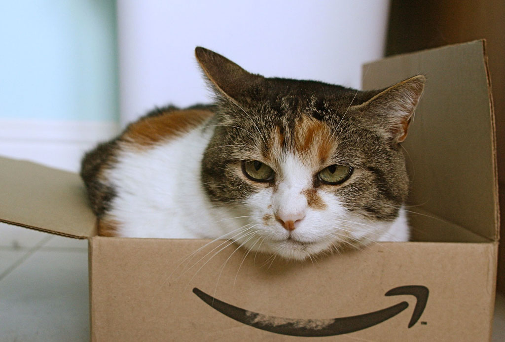 Fact: los gatos pueden tener cualquiera de estas 5 personalidades - gato-2