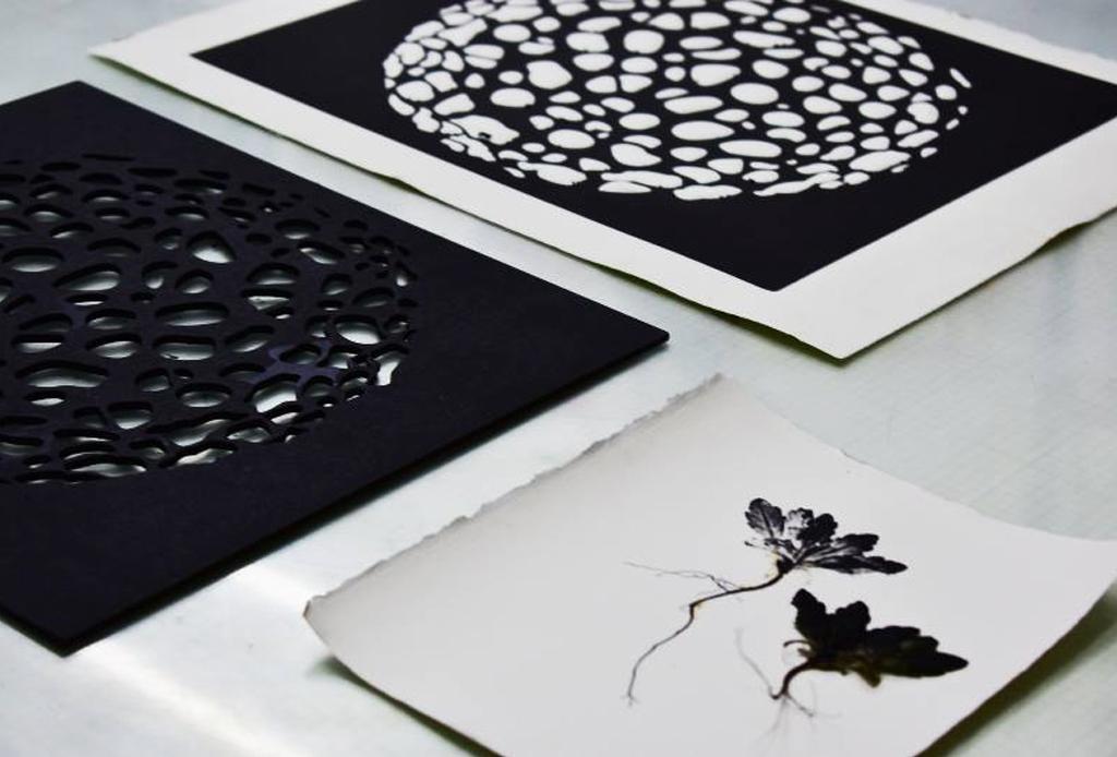 Taller de Impresión Botánica y Microscópica - taller-impresion