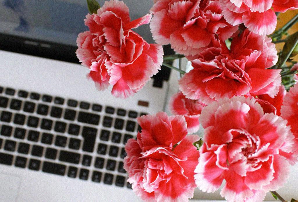 Decora tu workspace con estas flores que durarán más de una semana - clavel