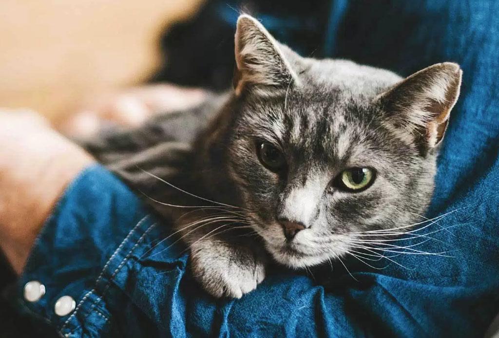 ¿Sabes cuál es la diferencia entre las personas que prefieren a los gatos o a los perros?