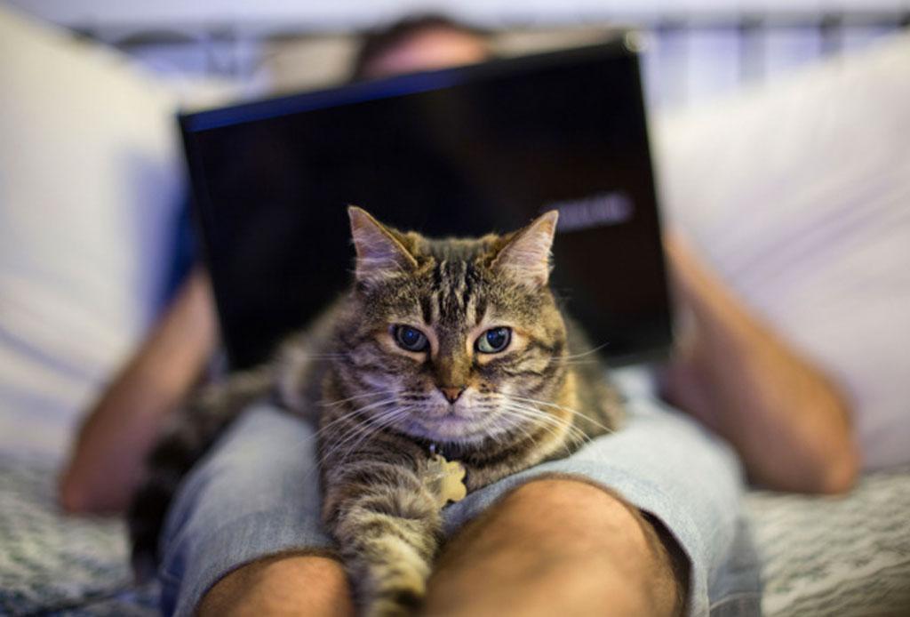 ¿Sabes cuál es la diferencia entre las personas que prefieren a los gatos o a los perros? - persona-gato-o-perro