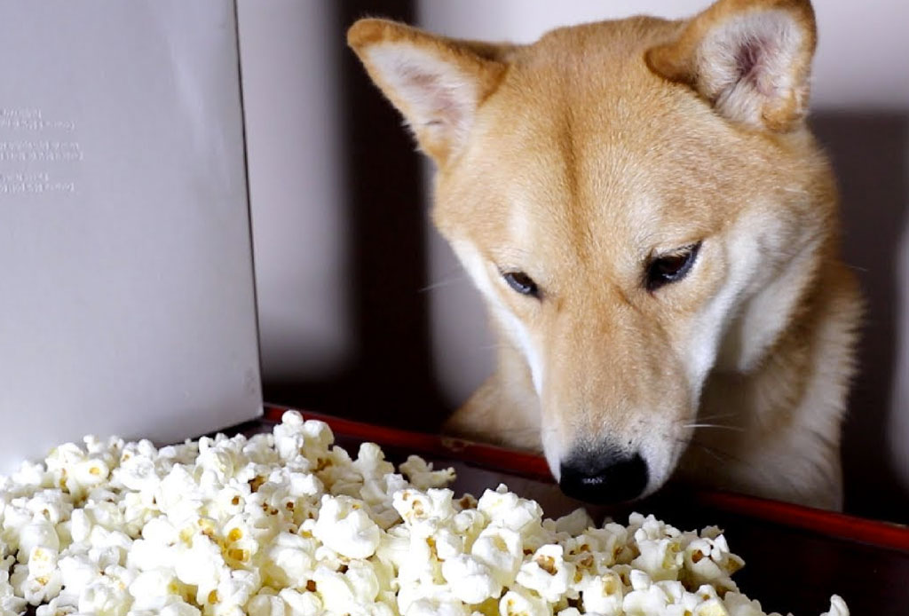 Los gatos y los perros son la mejor compañía para ver series, según Netflix - netflix-gatos-perros-mejor-compania-4